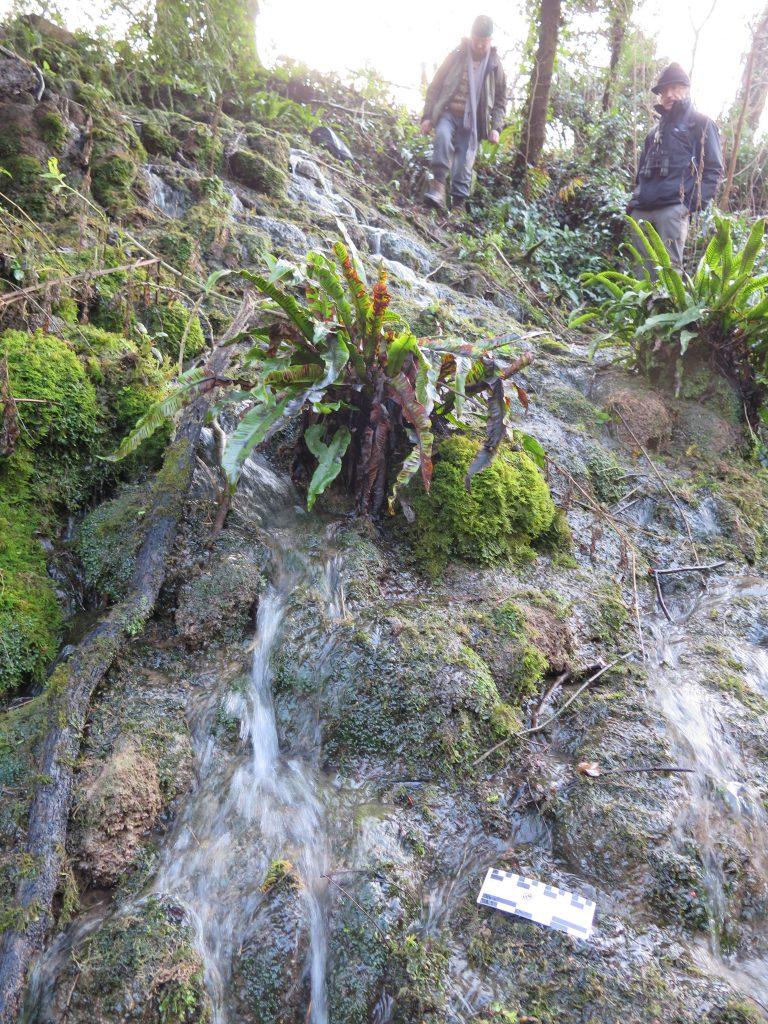 Modern tufa cascade